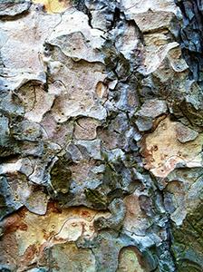 bark300